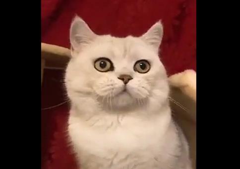 Katze kommt in die Gänge