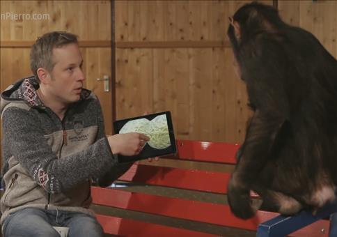 iPad Tricks für einen Affen