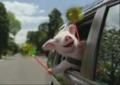 Schwein an Bord