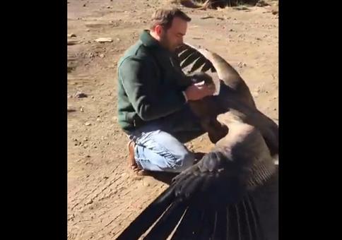 Kondor bedankt sich bei seinem Retter