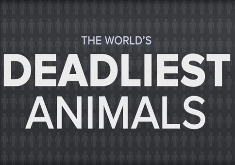 Was ist das weltweit tödlichste Tier?