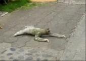 Faultier will eine Straße überqueren