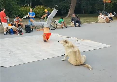 Breakdance Hund
