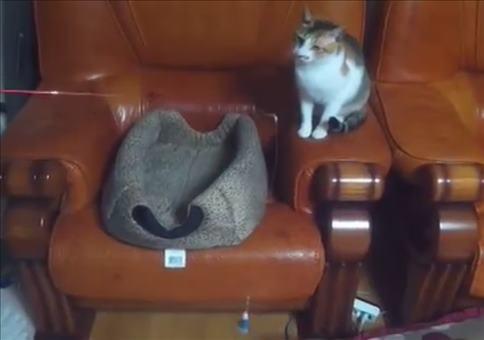 Katze angelt Katze