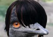 Emu Picdump #01