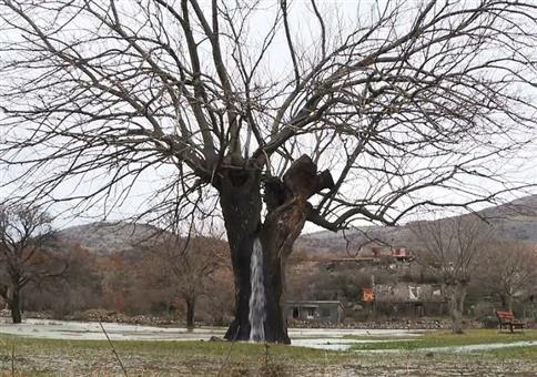 Der Baum, der Wasser speit