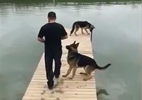 Dieser Hund ist doppelt geschickt