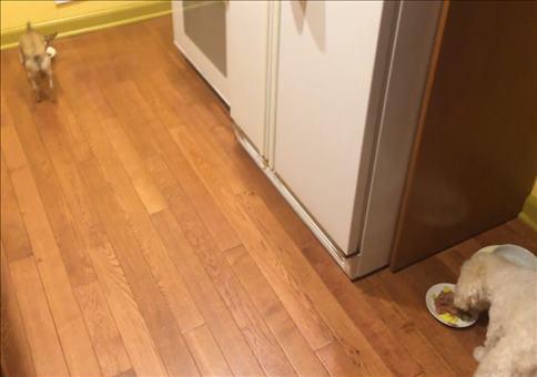 Hund möchte nicht alleine essen