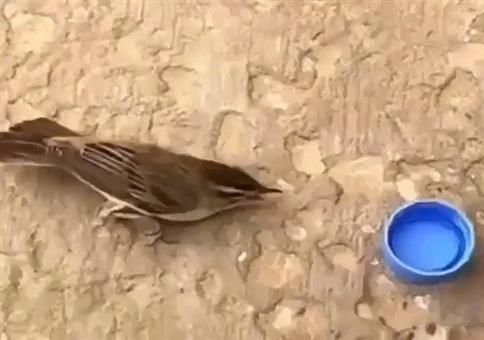 Dem Piepmatz Wasser geben