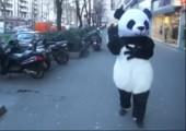 Panda nutzt die Macht