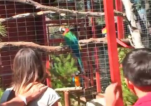 Dem Papagei im Zoo das Sprechen beibringen