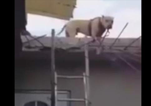 Der Hund auf der Leiter