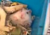 Der Horror Hamster