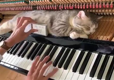 Katze mit Schlafplatz auf dem Klavier