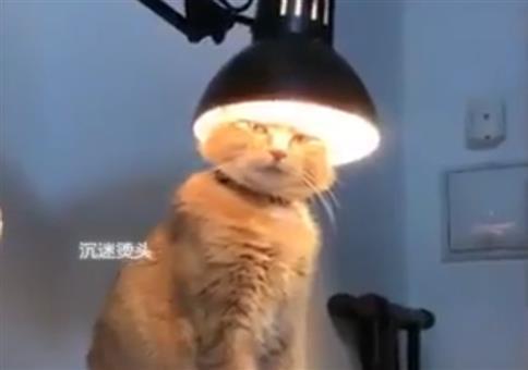 Katzenlampe