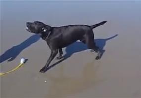 Hund mit Arschwasser