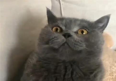 Katze mit Papiertüte = Endgegner