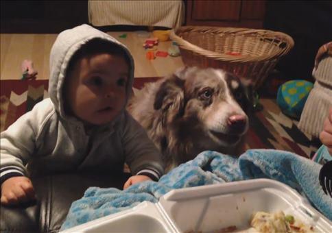 Wenn der Hund mehr sagt als das eigene Kind