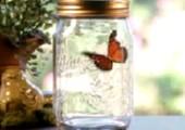 Geschenktipp zum Valentinstag: Schmetterling im Glas