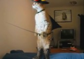 Die Musketier-Katze