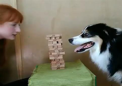 Hund spielt Jenga