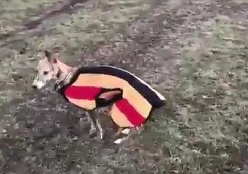 Bobby rennt gerne Pferden hinterher