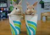 2 Rabbits, 2 Cups