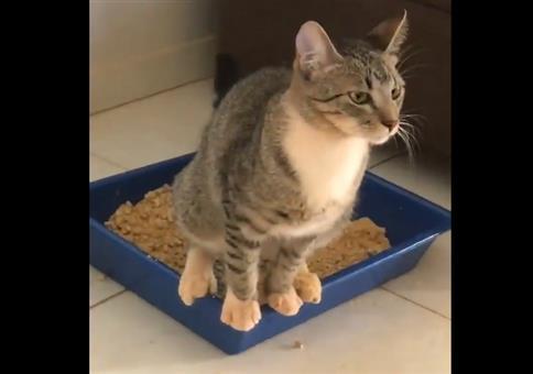 Katzenklo, Katzenklo, ja das macht die Katze froh