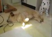 Wenn Hunde träumen