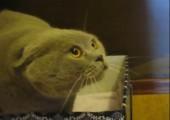 Buddhisten Katze