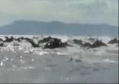Viele Delfine