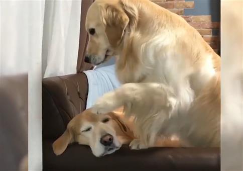 Hund anfassen und glücklich werden
