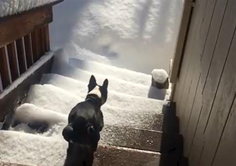 Der letzte Sprung in den Schnee