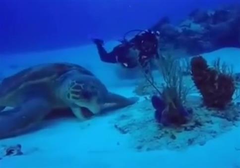 Riesige Meeresschildkröte