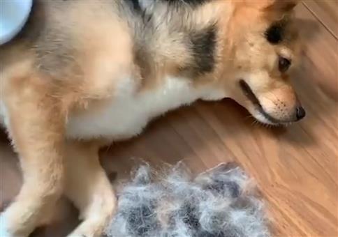 Wir basteln uns einen Hund aus Hundehaaren