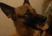 Hund mit Gefühlsschwankungen