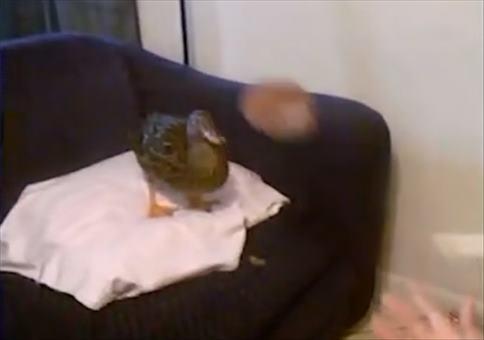 Ball mit der Ente spielen