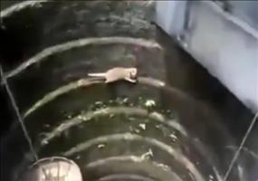 Katze im Brunnen braucht keine Hilfe