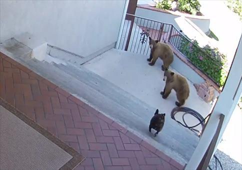 Kleiner Hund legt sich mit zwei Bären an