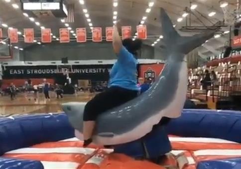 Reite den Hai!