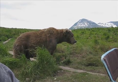 Wenn der Bär zu Besuch kommt