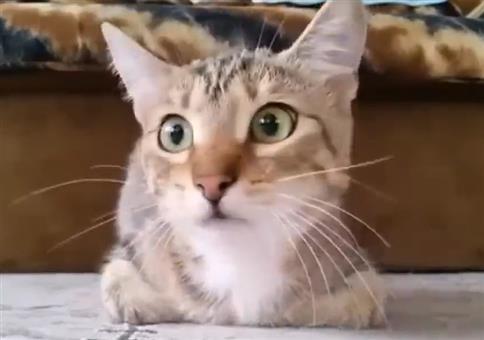 Katze schaut sich Horrorfilm an