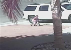 Katze rettet Kind vor streunenden Hund