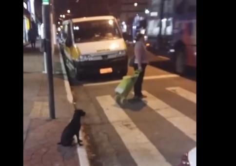 Hund an der Fußgängerampel