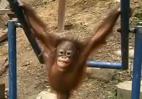 Kleiner Affe auf der Schaukel