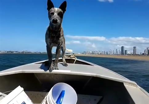 In Australien sind die Hunde sehr schnell