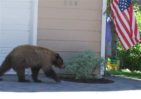 Bär trifft auf Mann
