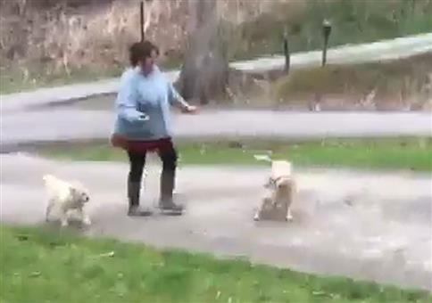 Die menschliche Hunde-Treppe