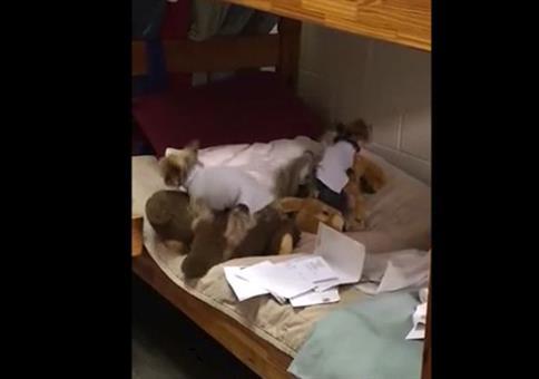 Hunde und Kuscheltiere