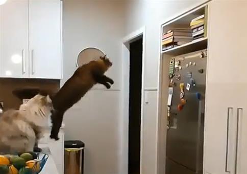 Sehr präziser Katzensprung